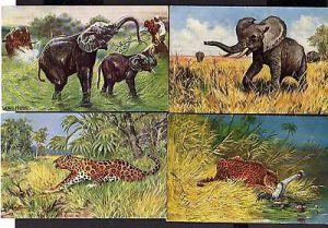 17 Ansichtskarte Tiere Afrika Elefant Kamel Nashorn Leopard Künstler Ad. Hoffmann Lu