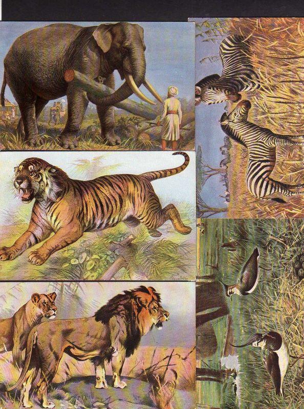 11 Ansichtskarte Zoo Tiere um 1920 Elefant Zebra Löwe Tieger Papagei Flamingo ...
