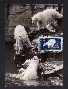 Maximumkarten DDR 556 Tierpark Berlin Eisbären seltene private Maxi Karte
