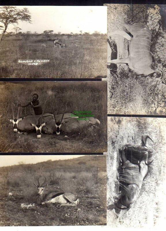 5 Ansichtskarte DSW Südwestafrika Windhuk Fotokarten Verlag R. Wywias Springbock An