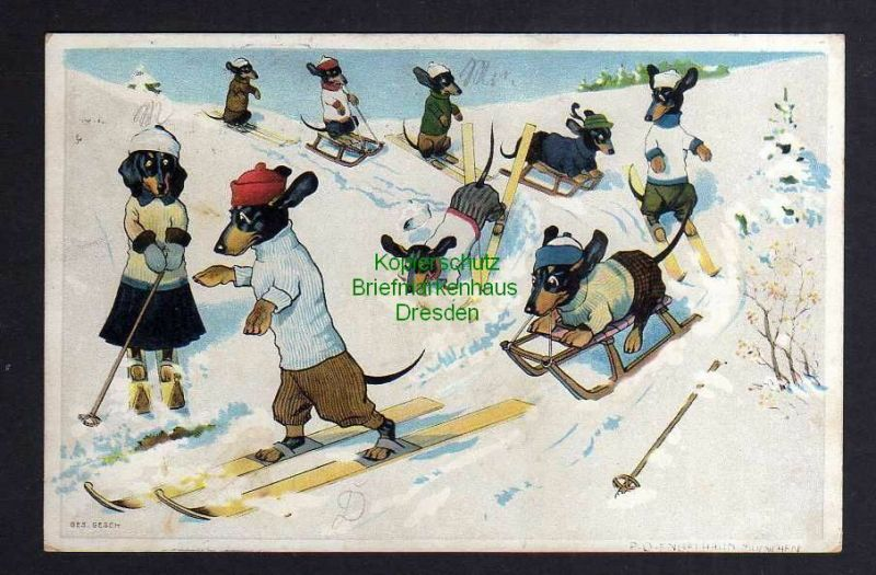 Ansichtskarte Zwickau 1908 Dackel beim Wintersport Ski Schlitten Künstlerkarte P. O. 0