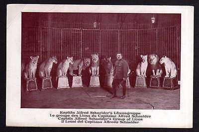 Ansichtskarte Zirkus Löwengruppe Kapitän A. Schneider
