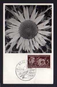 Maximumkarte DDR 1957 561 Naturschutz Silberdistel