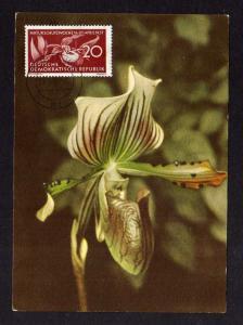 Maximumkarte DDR 1957 563 Naturschutz Frauenschuh