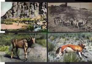 7 Deutsch Südwestafrika DSW Wasserstelle Elenantilope Spiessbock Kamele