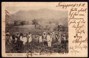 Ansichtskarte Singapore MSP 27 SMS Hertha 1902 Ceylon Tea Pluckers