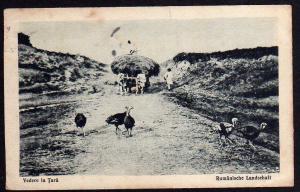 Ansichtskarte Rumänien um 1915 Rumäniche Landschaft Truthahn Bauer Ochsenwagen