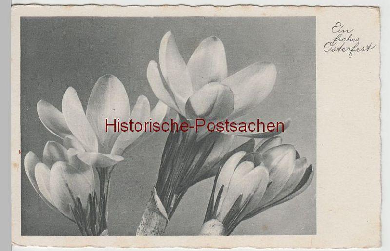 (66637-) AK Ein Frohes Osterfest, Krokusse, Feldpost 1941
