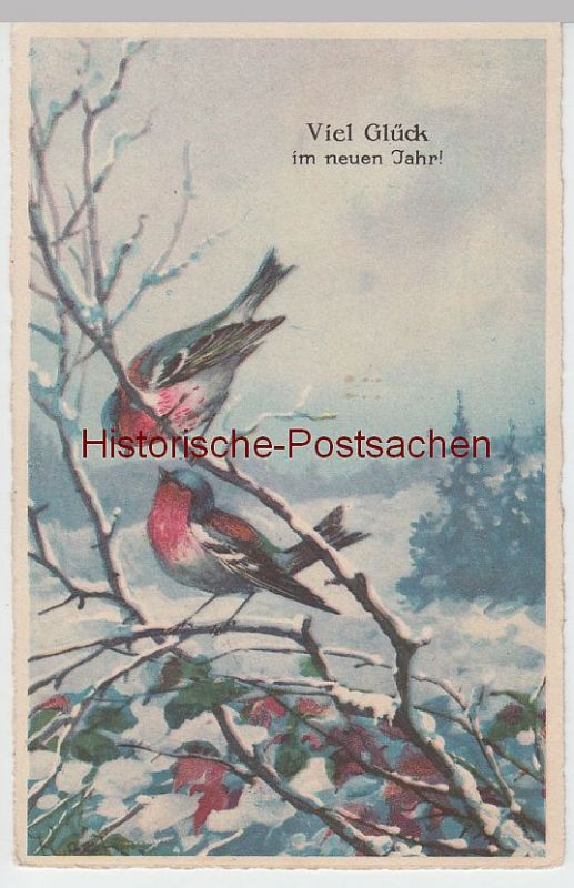 (51126) AK Viel Glück im neuen Jahr, Rotkehlchen, 1926
