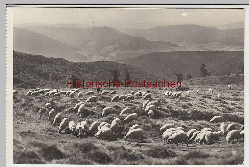 (38745) Foto AK Schlesische Beskiden (Beskid Slaski), Blatnia, 1966