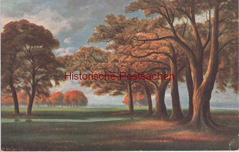 (108014) Künstler AK Witt, Laubbäume im Herbst, vor 1945