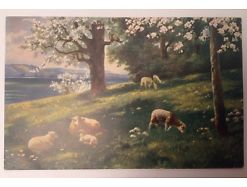 Schafe Lamm Weide 14221
