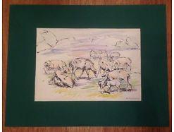 K. Neumann Weidende Schafe 65 x 50 ( nur Bild 45 x 31,5 )