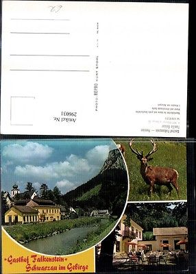 Schwarzau im Gebirge Gasthof Falkenstein Terrasse Hirsch Mehrbildkarte