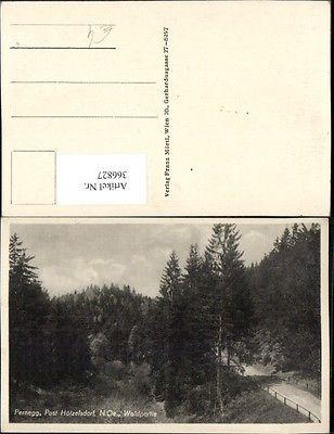 Pernegg b. Hötzelsdorf Waldpartie Wald