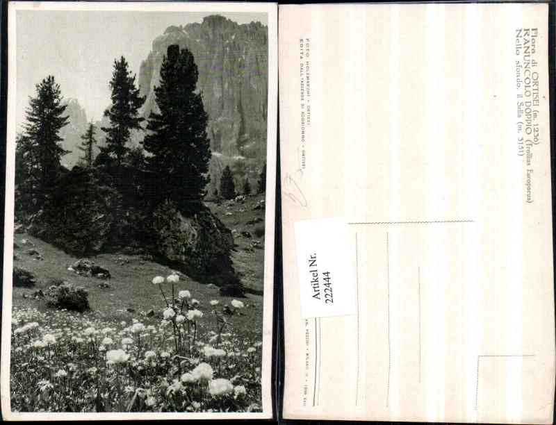 Trentino St. Ulrich in Gröden Flora di Ortisei Ranuncolo Doppia Nello sfo