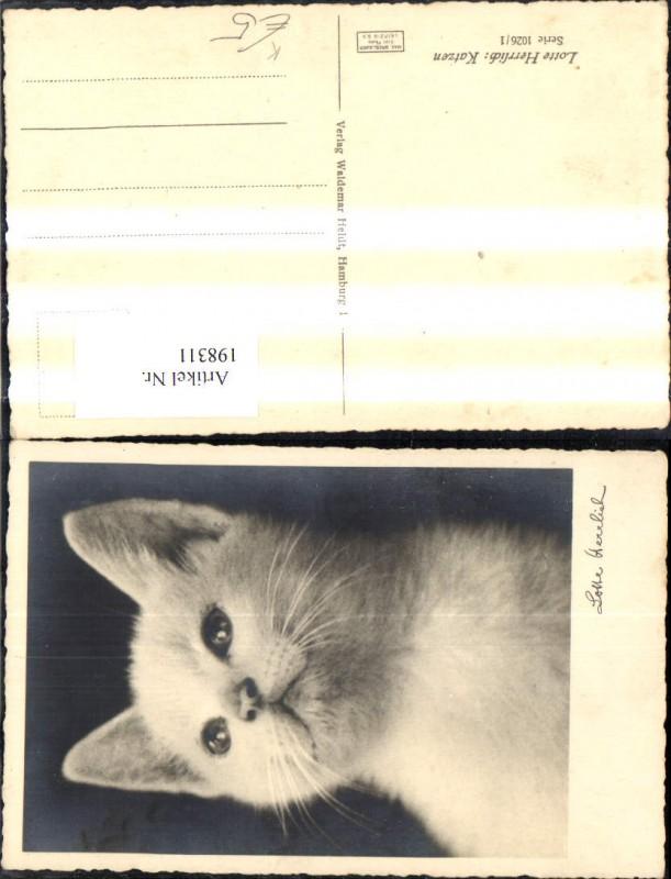 Tier Katze Künstler Ak Lotte Herrlich Weisse Katze