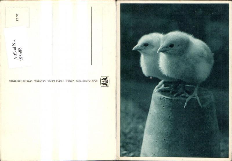 SOS Kinderdorf 22/57 Vögel Küken a. Tontopf sitzend