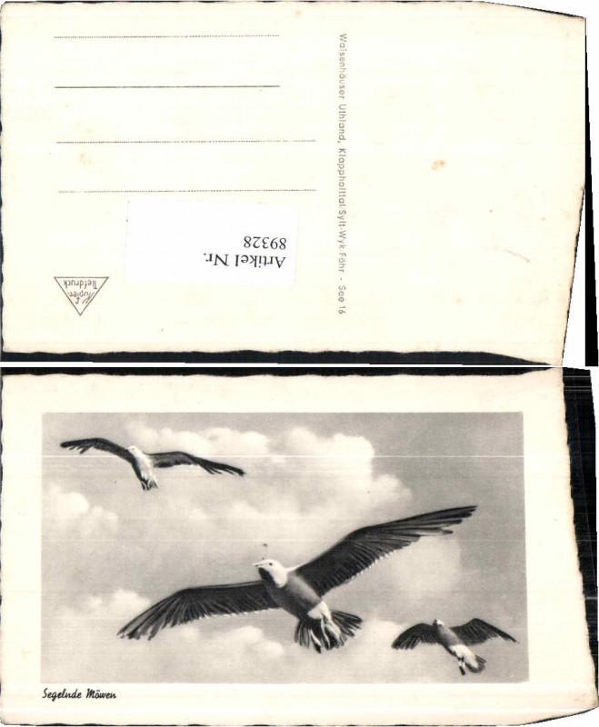 89328;Segelnde Möwen Vögel Möwe