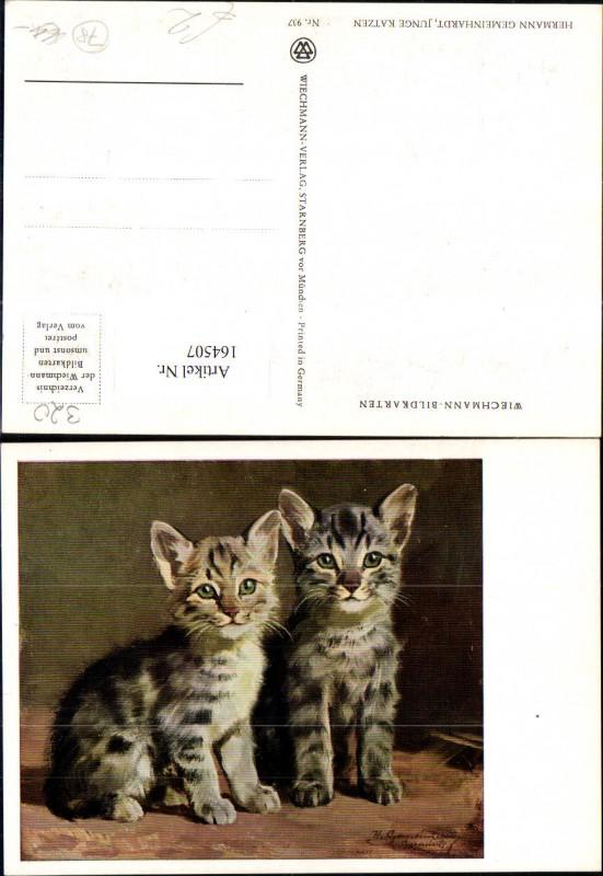Katze Junge Katzen sign Hermann Gemeinhardt