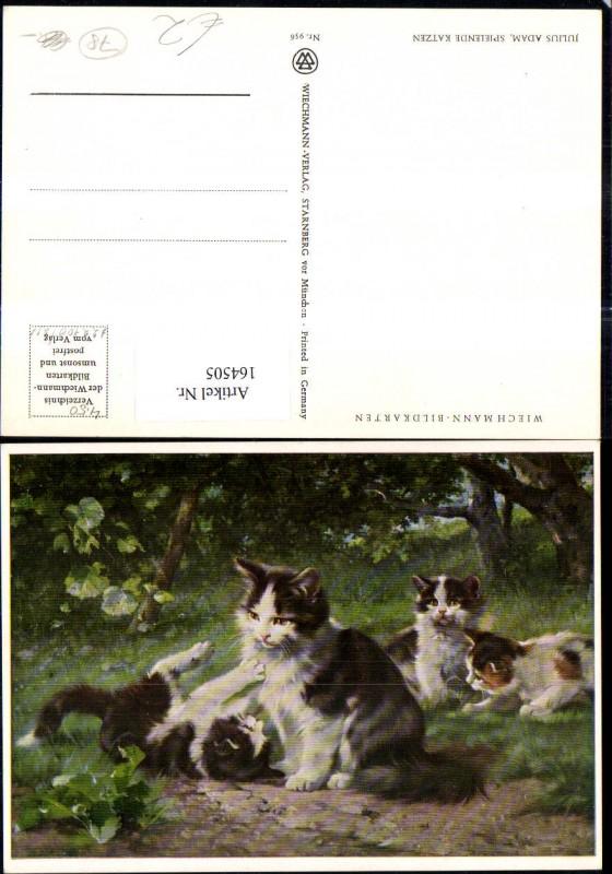 Katze Katzen Kätzchen Katzenmutter m. Katzenkinder b. Spielen