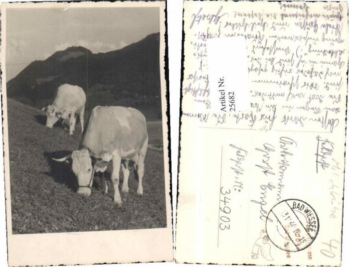 25682;FotoAK Kühe auf Weide Stier b. Bad Wiessee