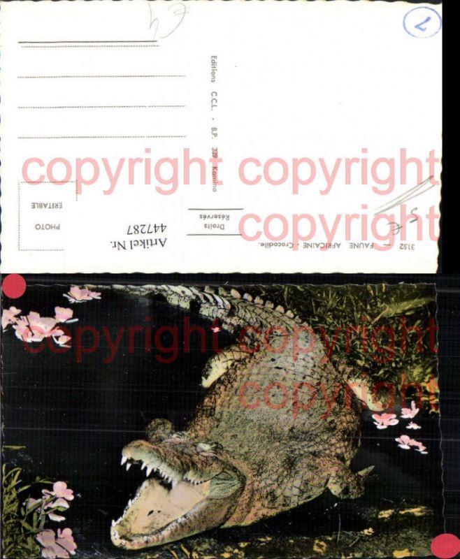 Faune Africaine Afrika Crocodile Krokodil Tier