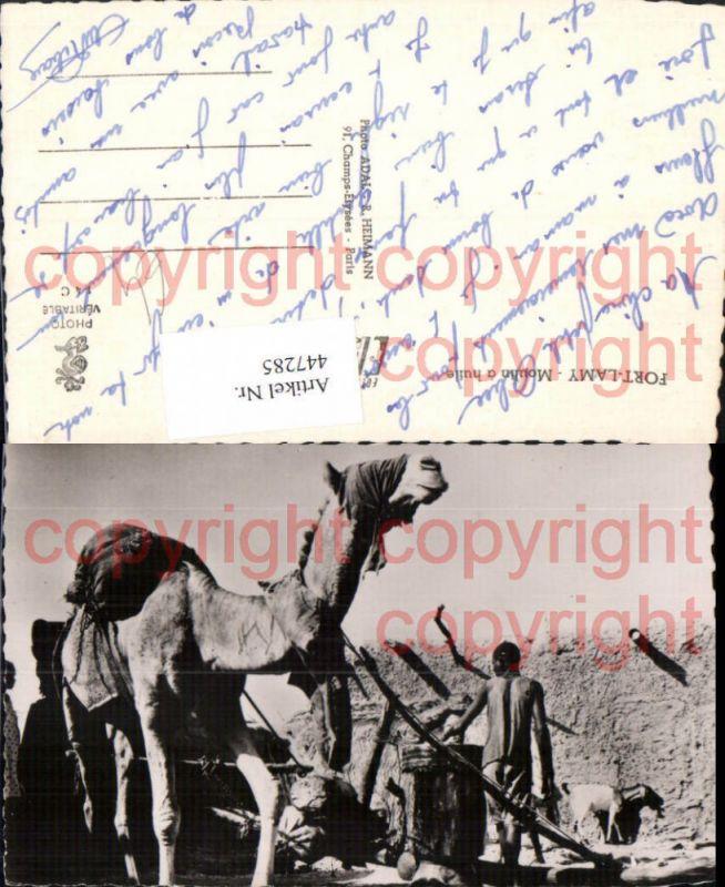 Fort-Lamy N'Djamena Moulin a huile Tier Kamel