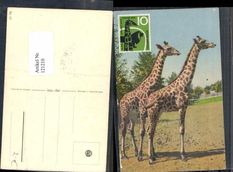 Tolle Karte Tiere Giraffen Giraffe