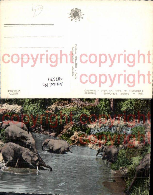 Foto Ak Faune Africaine Troupeau d Elephants au Bain Badende Elefanten