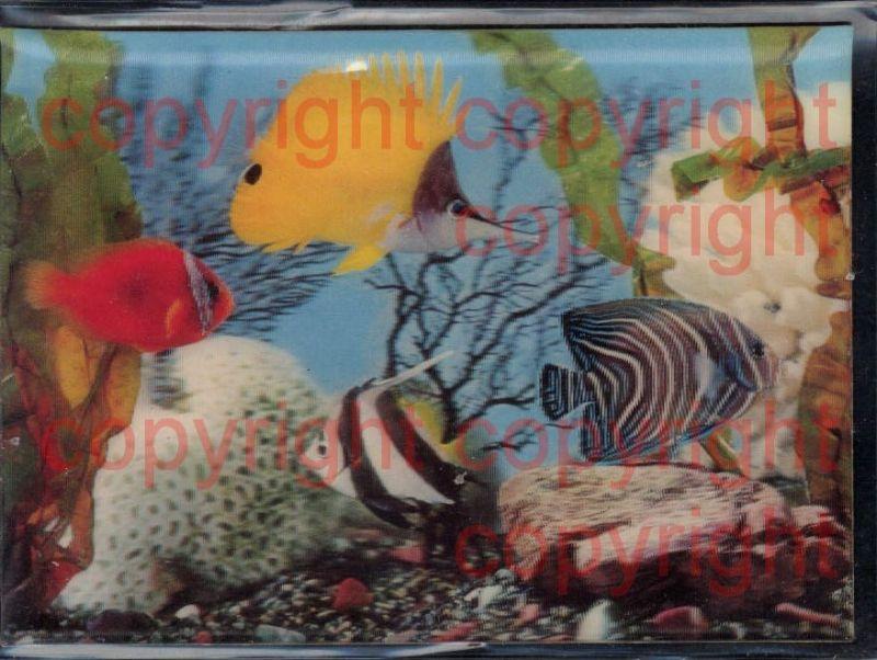 3D 3 D 3-D Karten Fische Aquarium