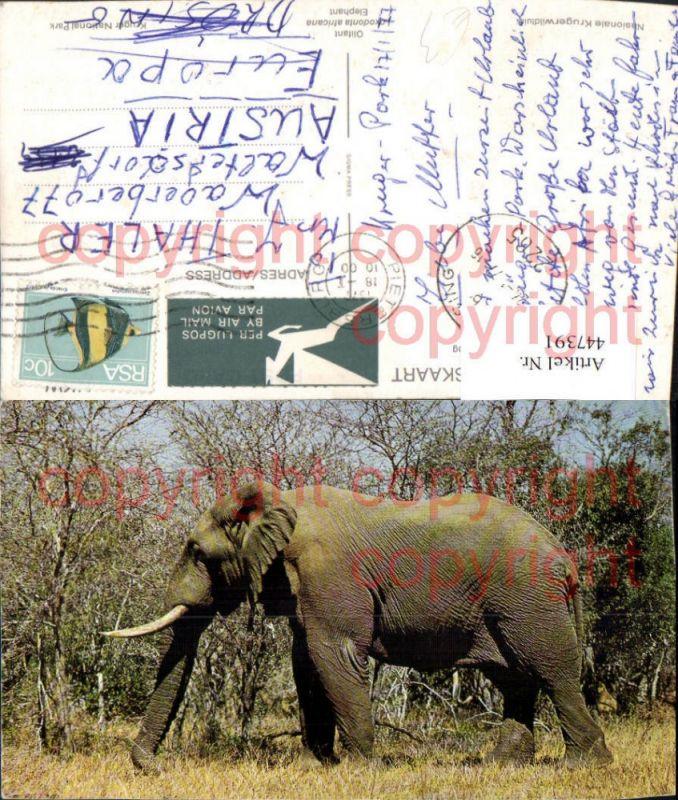Nasionale Krugerwildtuin Tier Elefant