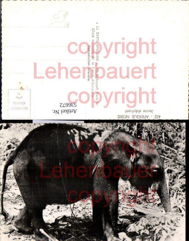 Tiere Elefant Jeune Elephant Afrique noire