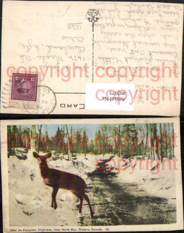 Ontario Deer on Ferguson Highway near North Bay Wild Reh Winterbild