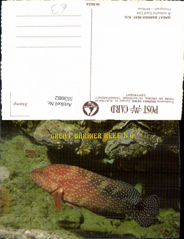 Tiere Australia Great Barrier Reef Fisch Coral koralen Queensland