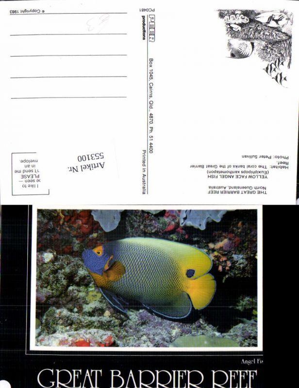 Tiere Great Barrier Reef Australia Koralen Fisch Angel Fish