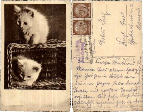 2 NICE CATS PERSER STYLE in BASKET 1940s Katzen im Korb