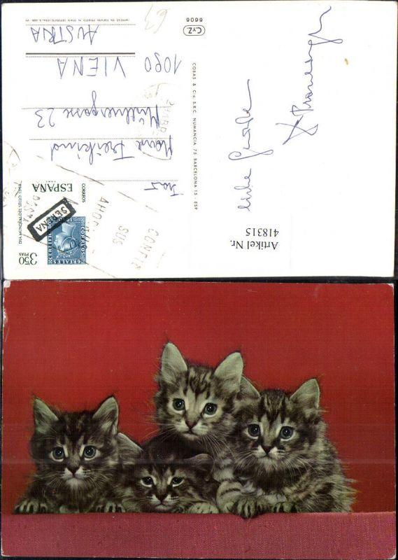 Vier Katzenkinder Katzen