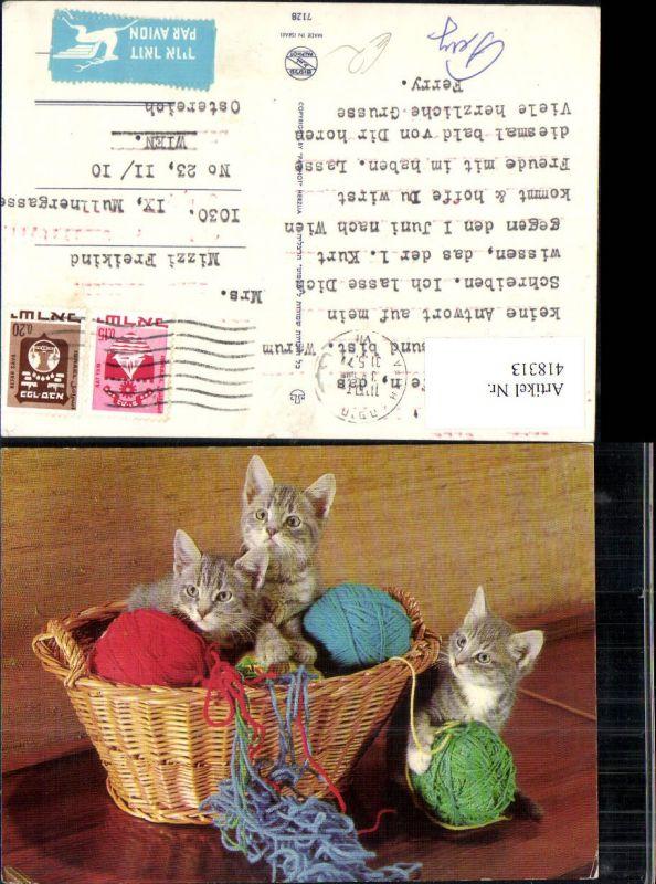 Drei Katzen Katzenkinder i. Korb Wollknäuel Wolle
