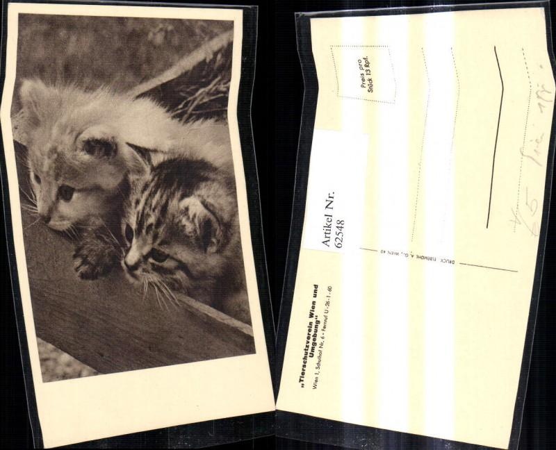 Österreichischer Tierschutzverein Katzen Katzenkinder schauen a. Holzkiste