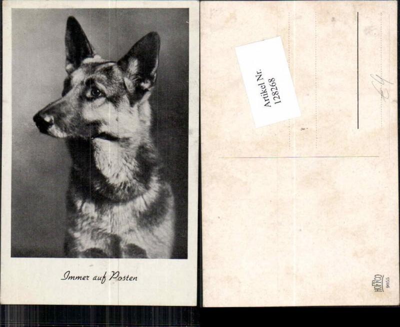 Deutscher Schäferhund Hund DOG Schäfer