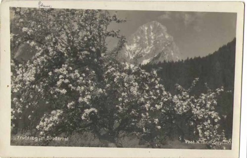 23983;Frühling im Stodertal bei Hinterstoder Priel 1931