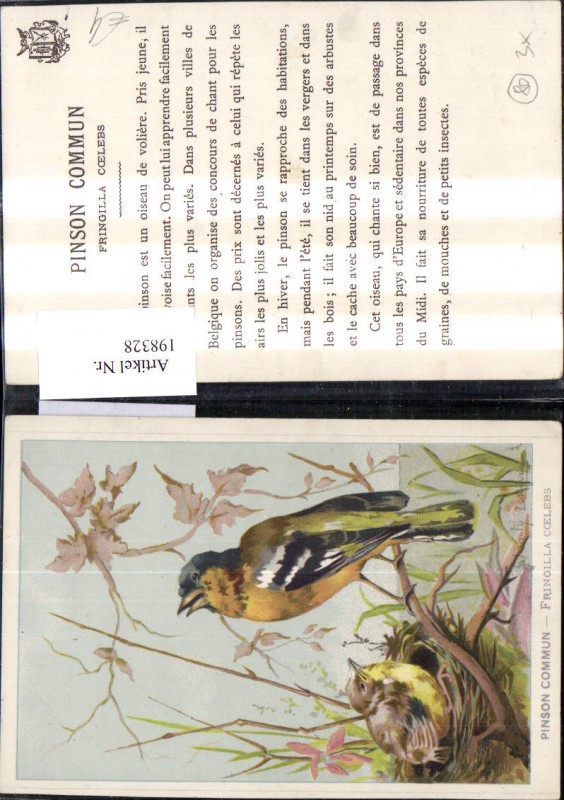 Tier Vögel Nest Pinson commun Fringilla coelebs