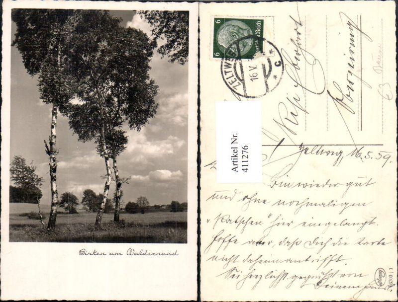 Foto Ak Birken am Waldesrand Baum Bäume Passepartout