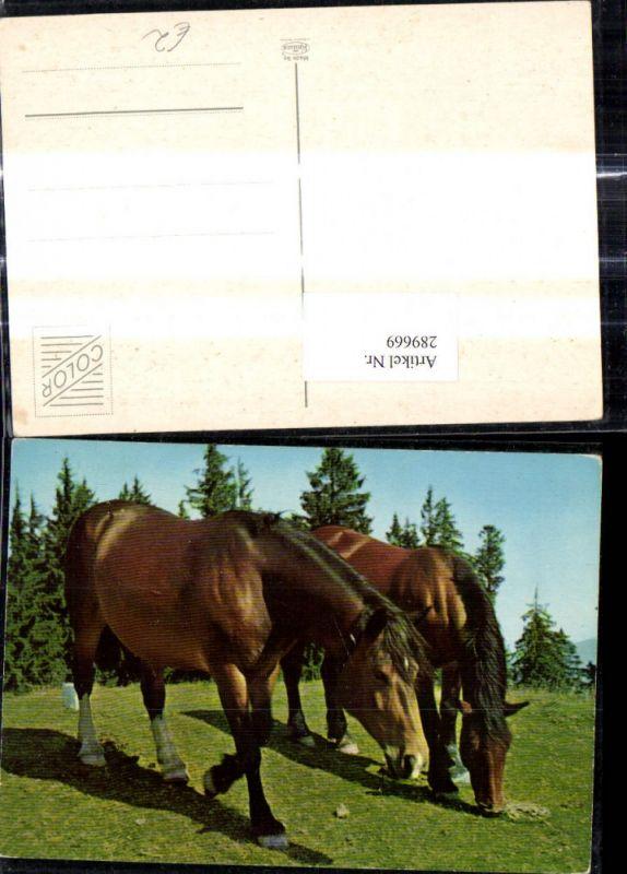 Pferd Pferde Bäume i. Hintergrund