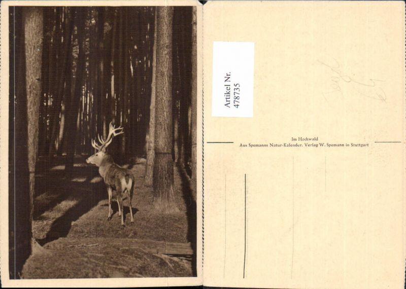 Jagd Hirsch in Wald Bäume