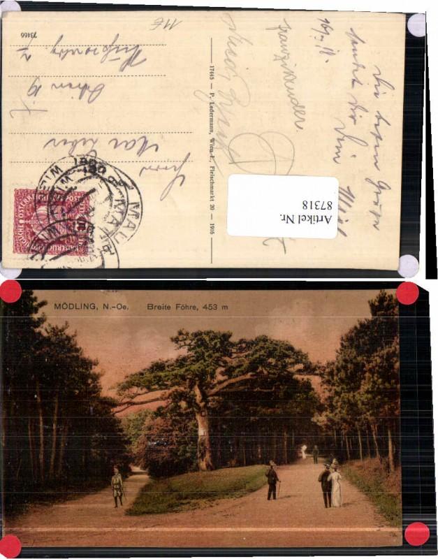 87318;Mödling bei Wien Breite Föhre 1916