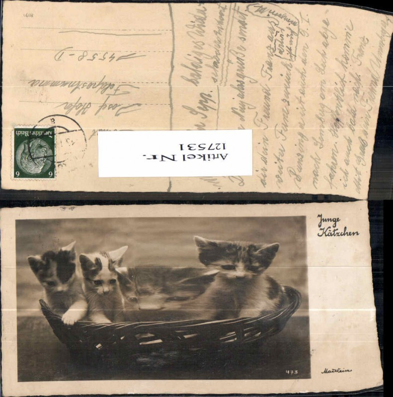 Katzen Katze im Korb Kätzchen