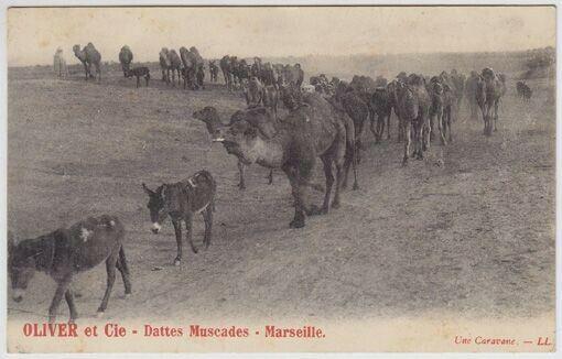 Oliver et Cie - Dattes Muscades - Marseille.... 1900