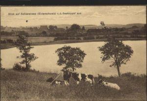 Schierensee Eiderschweiz x